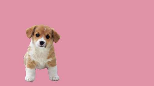 anjing cute edit