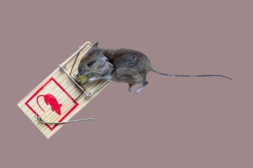 jebakan tikus edit2