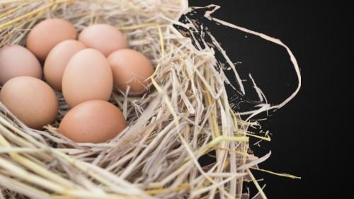 telur dalam sangkar