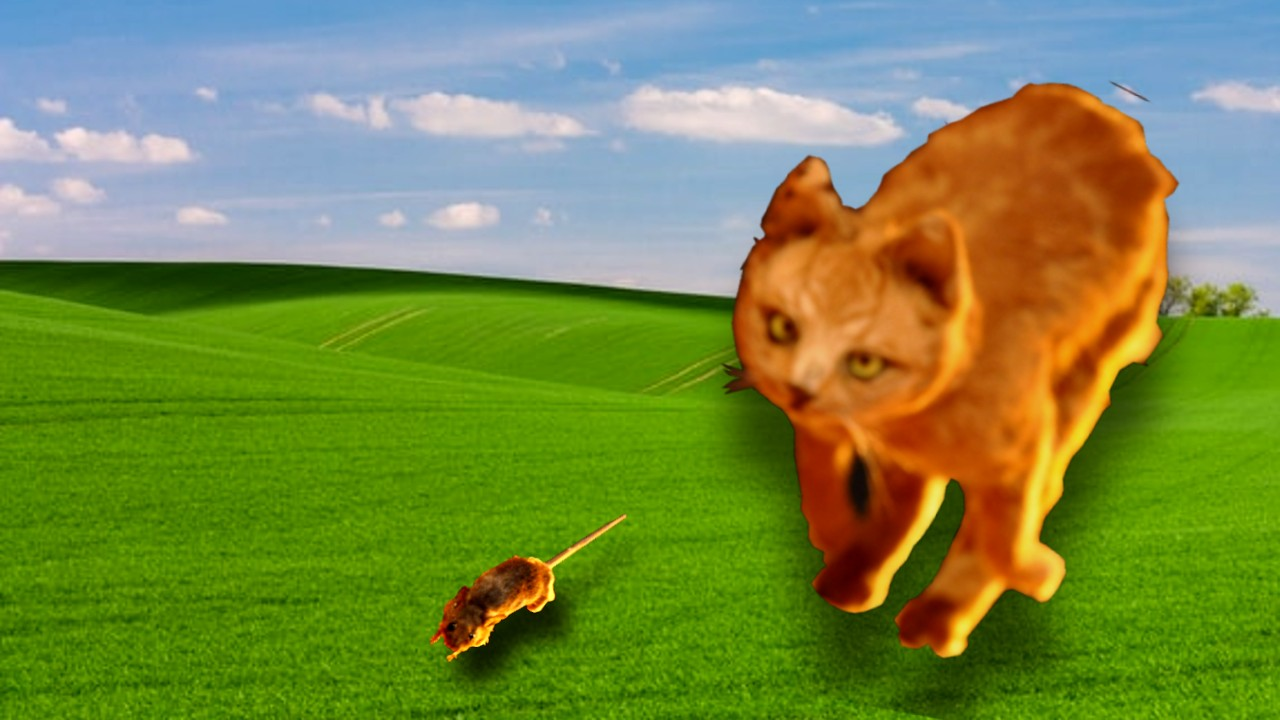 Tikus kucing