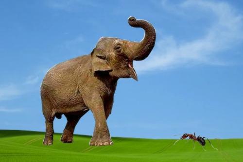gajah semut2
