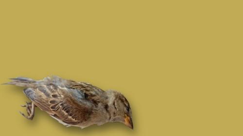 Burung mati edit